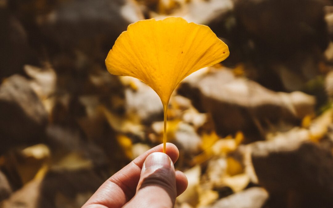 The resilience of Ginkgo
